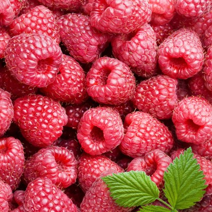fructe-zmeura