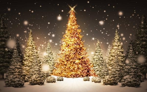 iarna-decembrie-zapada-copac