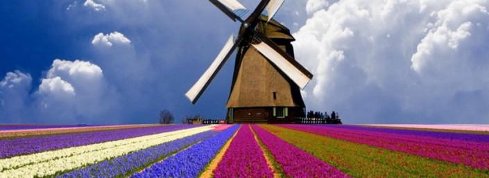 lalele_Olanda_moaradevant-e1430041996668-820x300